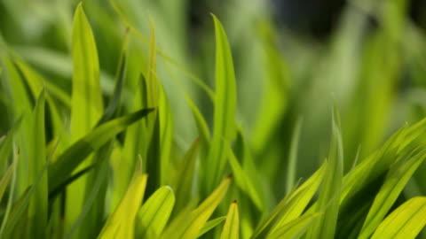 grass - rüzgar stok videoları ve detay görüntü çekimi