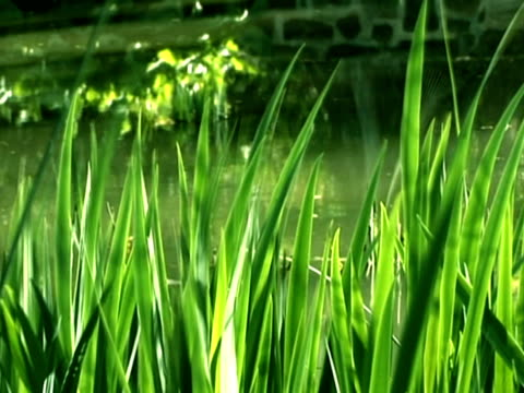 erba  - parte della pianta video stock e b–roll