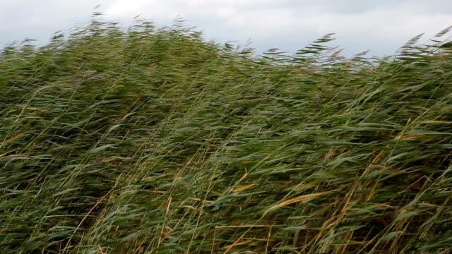 vídeos y material grabado en eventos de stock de hierba saludar con la mano en el viento - hierba planta