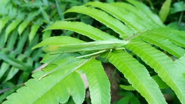 grasshopper on leaf fern