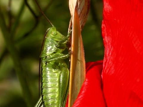 PAL: Grasshopper video