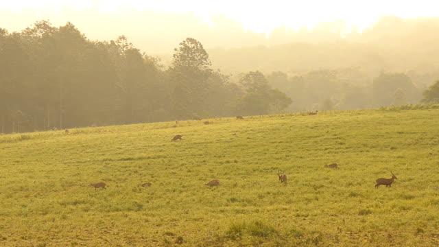 grassland reserve in morning video