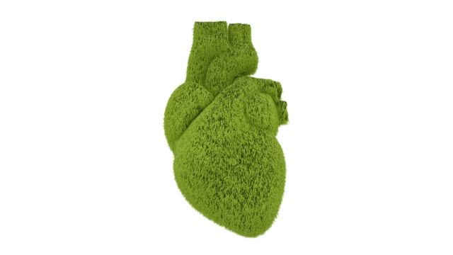 Grassy Heart beating on white background. 3D animation