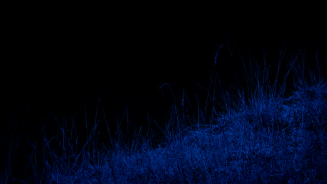 Grassy Mountainside In The Moonlight