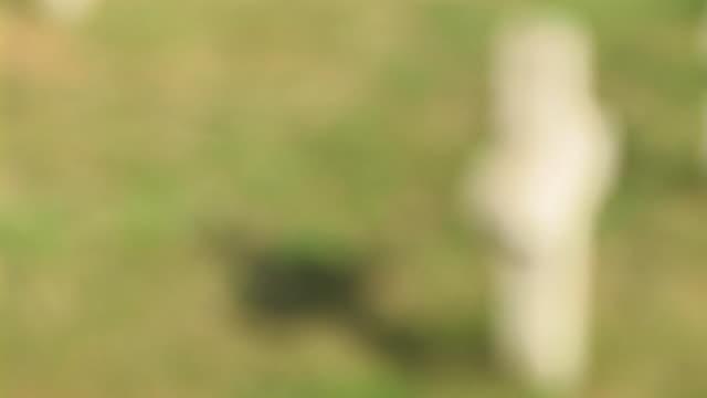 stockvideo's en b-roll-footage met hd: gravestone - infaden