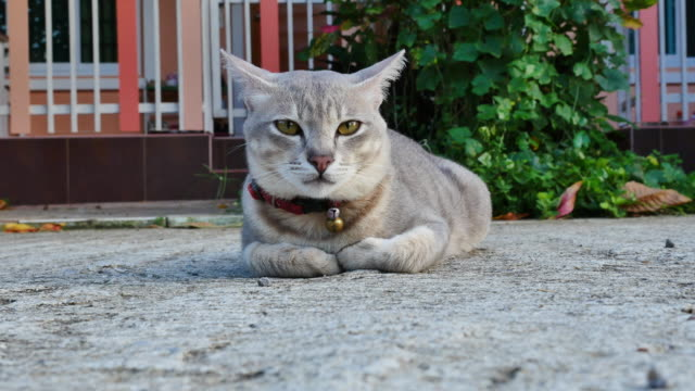 gray cat lie down on the floor. - кошка смешанной породы стоковые видео и кадры b-roll