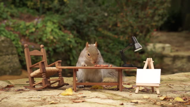 gray squirrel nibbles nuts from behind a miniature dining table - noci video stock e b–roll
