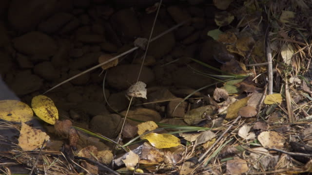 Gray stones lie under shallow water surrounded by dry leaves and yellow needles