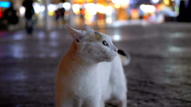 Gray Stray Egyptian Cat on a Street at Night