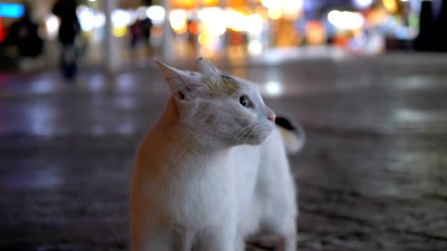 灰色流浪埃及貓在街道在晚上 - lost 個影片檔及 b 捲影像