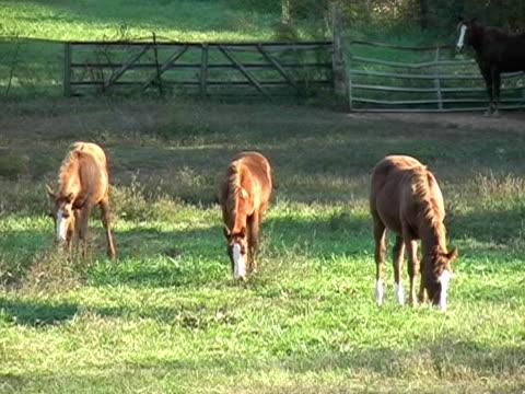 grasen colts - pferdeartige stock-videos und b-roll-filmmaterial