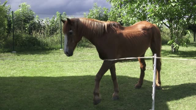 Grazing horse on a green meadows. Horse on a green grass. video