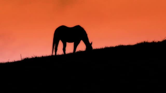 Grazing Horses Silhouette video