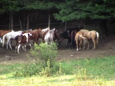 pal: pferde grasen - pferdeartige stock-videos und b-roll-filmmaterial