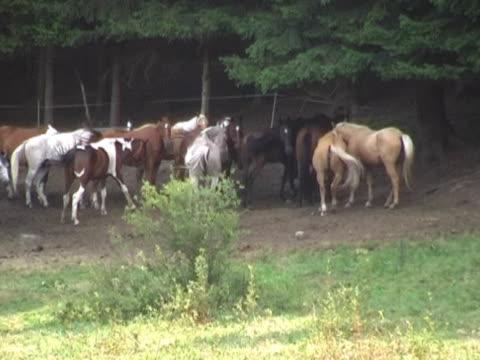 ntsc: pferde grasen - pferdeartige stock-videos und b-roll-filmmaterial