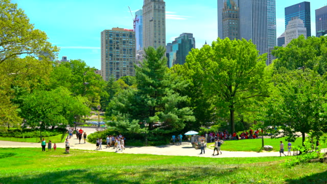 Great lawn in Central Park New York. USA central park manhattan stock videos & royalty-free footage