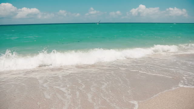 Great shot of beautiful ocean water at beach in Miami with birds video