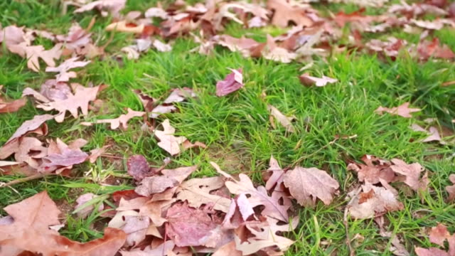 Great shot of leaves lying down in green grass video