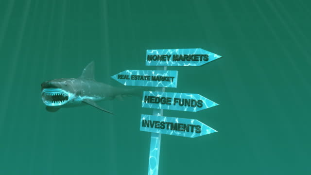 Great White Shark And World Stock Markets video