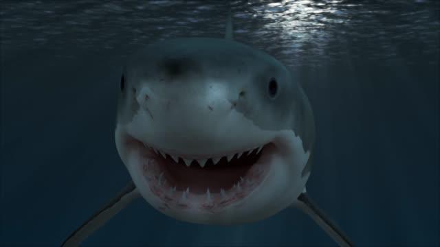 büyük beyaz köpekbalığı saldırısı - sert kavramlar stok videoları ve detay görüntü çekimi