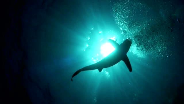 great white shark. underwater scenery - молодое животное стоковые видео и кадры b-roll