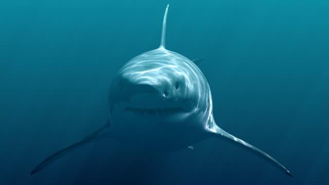 stockvideo's en b-roll-footage met grote witte haai (megalodon) - reus fictief figuur