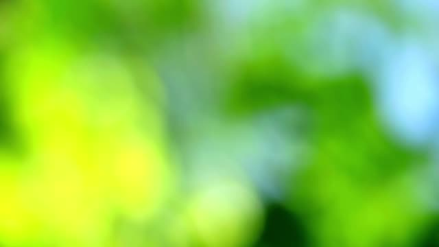 greem yellow abstract blur colorful leaves flower tree in garden