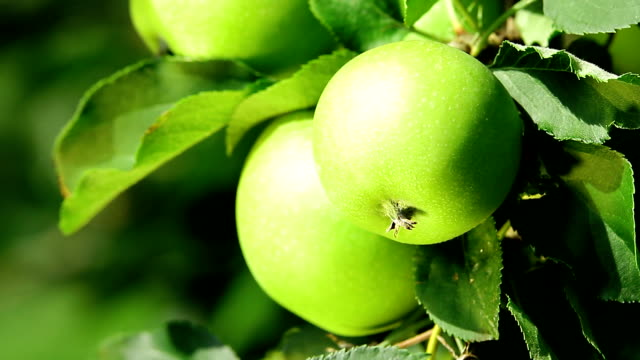 Green Apple. Close Up. video