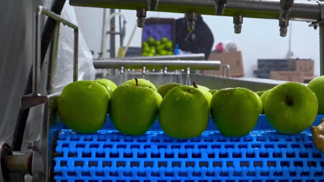 Green apples on conveyor belt, automation to squeeze organic juice.