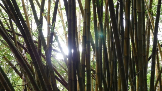 Green bamboo in the forest