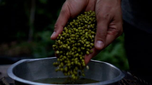 Green bean seed falling slow motion video