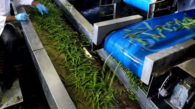 Green beans on a conveyor belt video