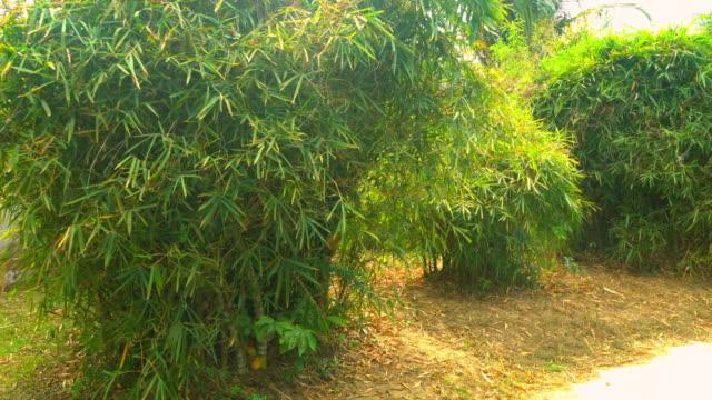 Green Big Bushes at Summer. Beautiful Chinese Nature