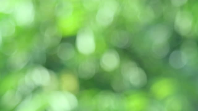 Green bio background, abstract blurred foliage bright sunlight Green bio background, abstract blurred foliage bright sunlight. Organic design nature abstract background with copyspace for text advertising design. Green abstract light background and bokeh effect focus on foreground stock videos & royalty-free footage