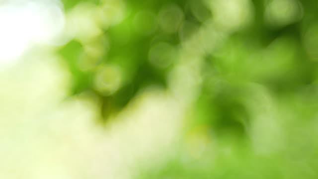 green bokeh or de focused leaf background. - soft focus video stock e b–roll