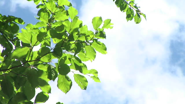 hd: verde ramo - fronda video stock e b–roll