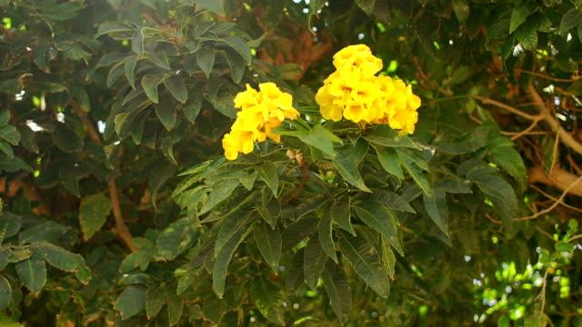 grön buske med gula blommor vajar i vinden - norrbotten bildbanksvideor och videomaterial från bakom kulisserna