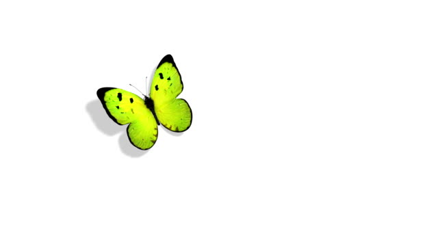 Green Butterfly Flying On A Blue Background Beautiful 3d