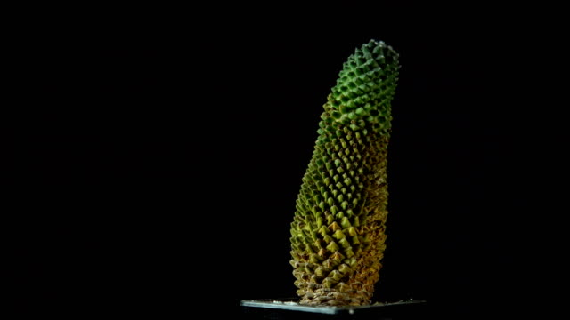 Green cactus rotates on dark background.