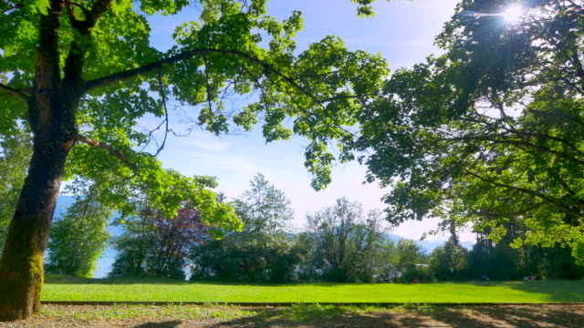 green city park, urban forest tree landscape - spring stock videos & royalty-free footage
