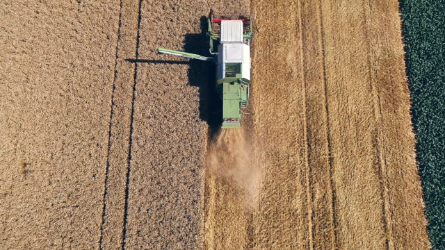 Green combine harvester harvesting wheat on a field in Austria video