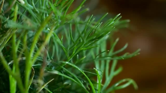 stockvideo's en b-roll-footage met groene venkel op tafel - venkel