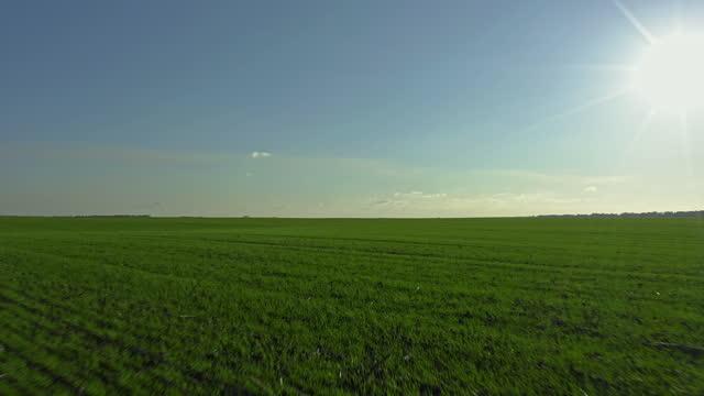 vídeos de stock e filmes b-roll de green field and blue sky, sun going down above beautiful field of winter crops - linha do horizonte sobre terra