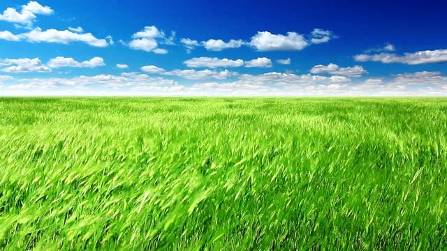grünen feld und bewölkten himmel - roggen stock-videos und b-roll-filmmaterial