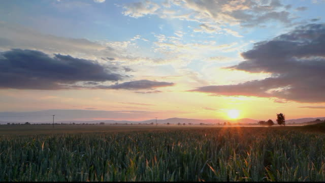 Green field at sunset, time lapse video