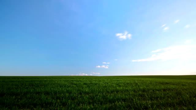 green field sunny day