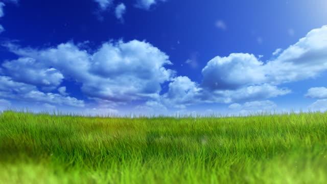 Green field under blue sky video
