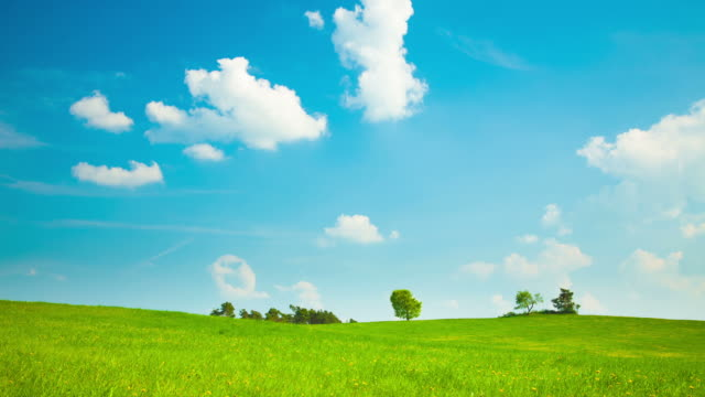 TIME LAPSE: Green Field Time lapse: Landscape - green field under blue sky grass area stock videos & royalty-free footage