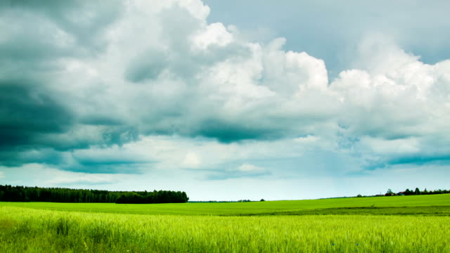 Green field with overcast clouds time lapse video