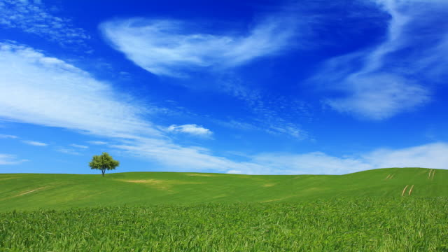 Green fields and the blue sky